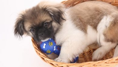 Photo of Why Your Pets Will Like These Toys?