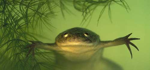 1328202013124226 Orange Frog in the Ice in Derby