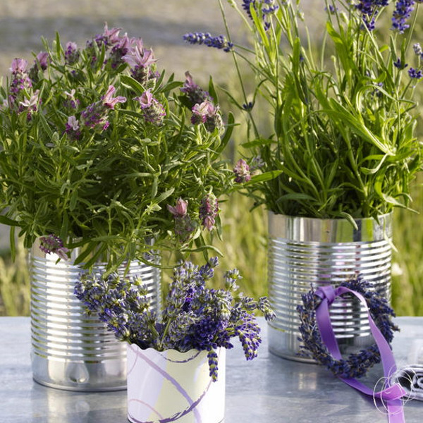 25-Lavender-Home-Decorating-Ideas-»-Photo-6 16 Ideas to Renew Your Home