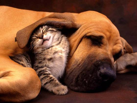 256341 House Pets That You'll Fall in Love