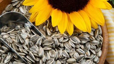 """Photo of Is """"Sunflower"""" Seeds a Healthy Snack?"""