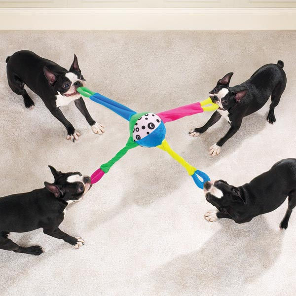 4-WAY-TUG Why Your Pets Will Like These Toys?