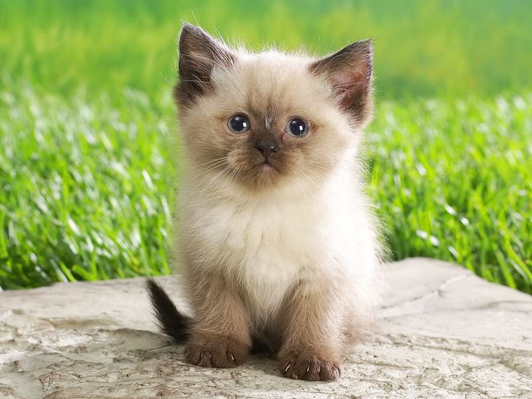 Cute-Kitten-babies-pets-and-animals-16731266-1600-1200 House Pets That You'll Fall in Love