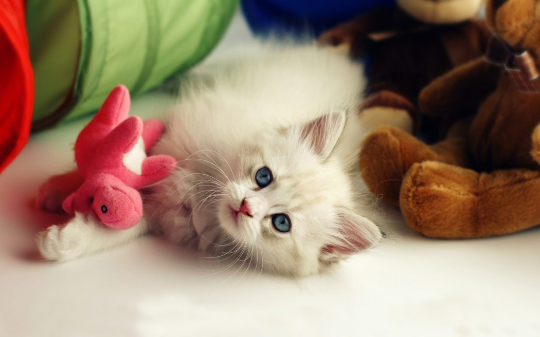 Cute-Pets-Mac-HD-Wallpapers-With-My-Little-Cat-547422 House Pets That You'll Fall in Love