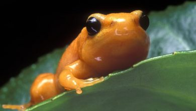 Photo of Orange Frog in the Ice in Derby