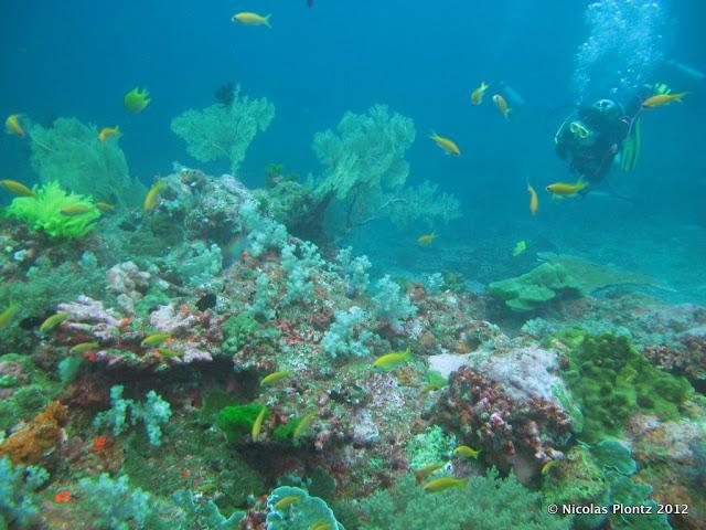 SimilanIslands_UWlandscape-757680 The Best 10 Vacations spots