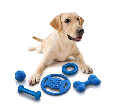 all_five Why Your Pets Will Like These Toys?