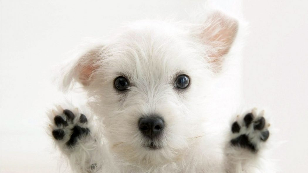 cute-dog-hd-170665 House Pets That You'll Fall in Love