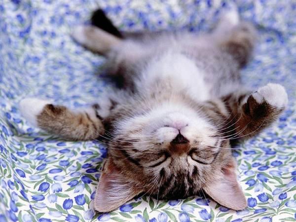 cute-little-kitten-cat-fur-ball House Pets That You'll Fall in Love
