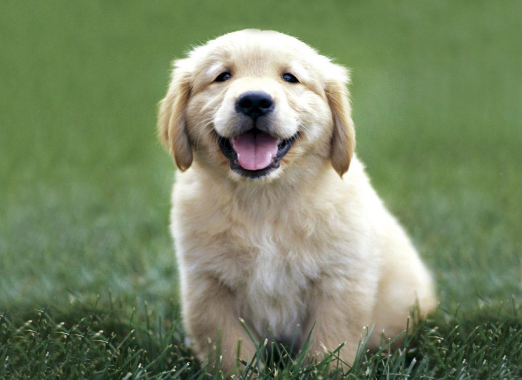 cute-puppies-with-worms House Pets That You'll Fall in Love