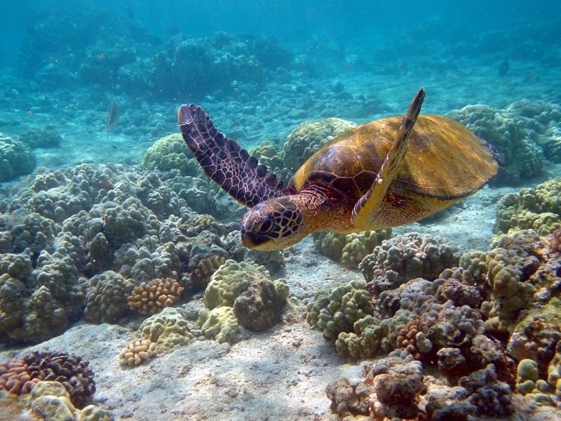 hawaii-see Tourists Sharing Their Tips For Hawaii Travel