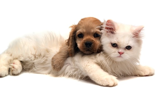 image.axd_ House Pets That You'll Fall in Love