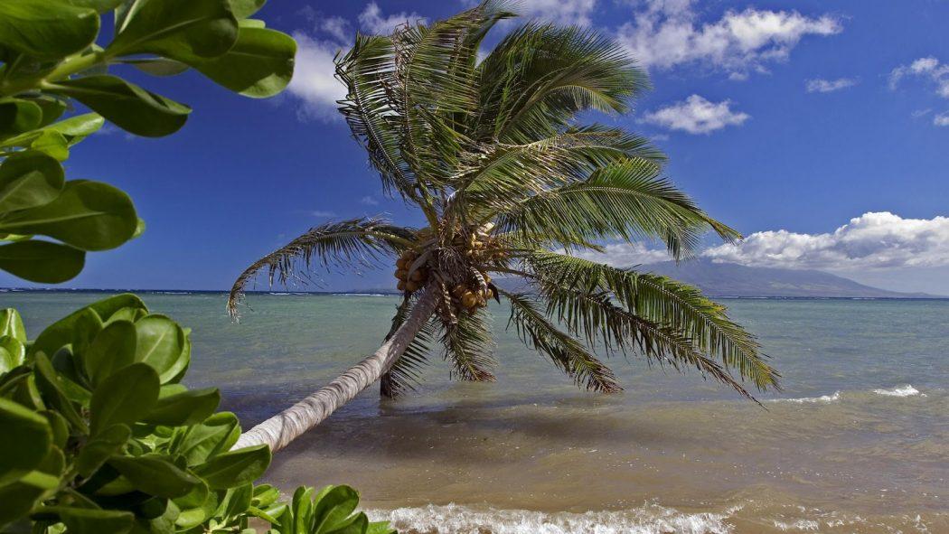 molokai-hawaii Tourists Sharing Their Tips For Hawaii Travel