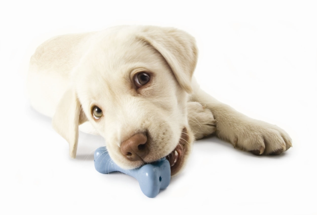 planet-dog-chew-toy Why Your Pets Will Like These Toys?