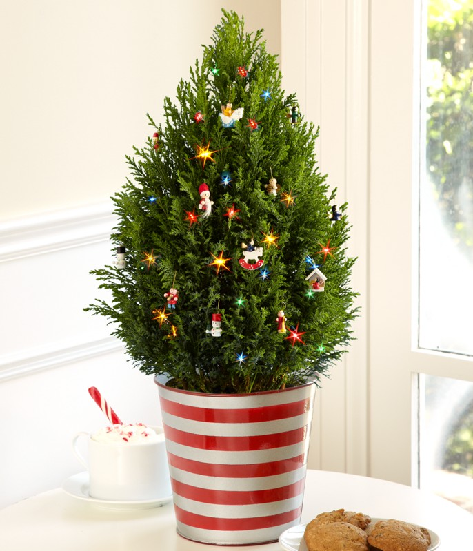 trees Prepare your Home Decorations For Next Holidays