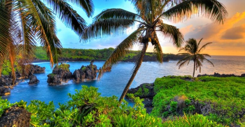 Where Coconuts Grow in Hawaii