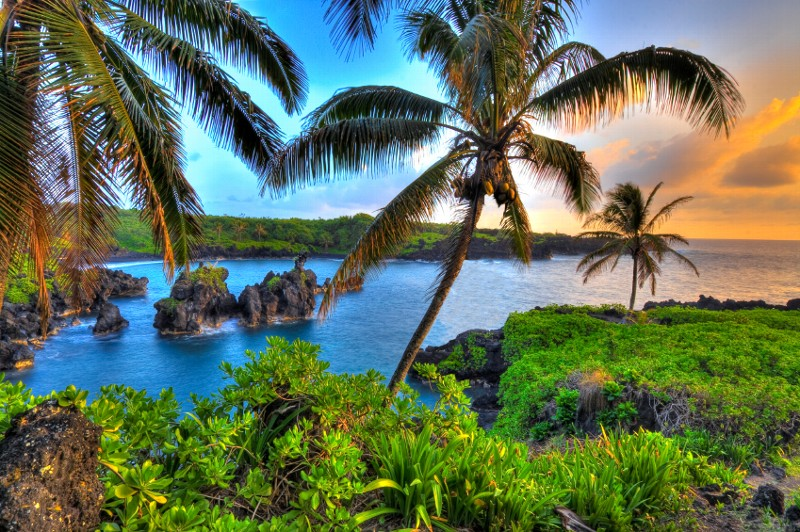 where-coconuts-grow Tourists Sharing Their Tips For Hawaii Travel