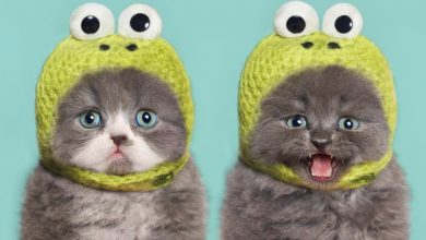 Photo of 10 Best Amazing Videos For Cats