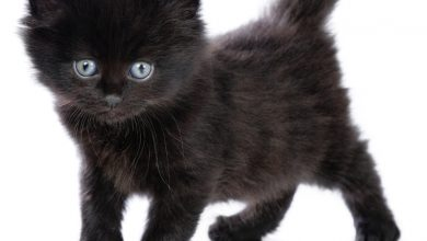Photo of The Most Beautiful Black Cats
