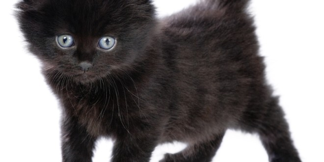 The Most Beautiful Black Cats