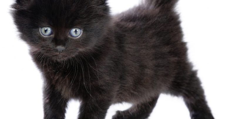 The Most Beautiful Black Cats Pouted Com