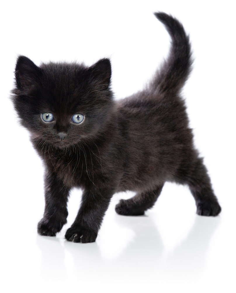 121 The Most Beautiful Black Cats