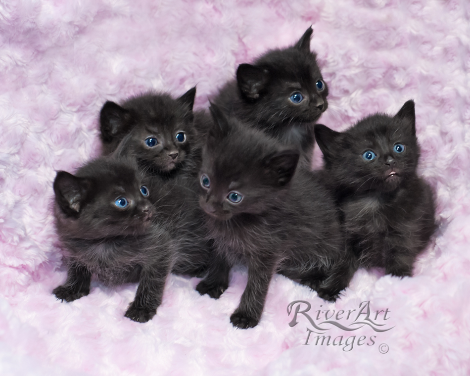 19 The Most Beautiful Black Cats
