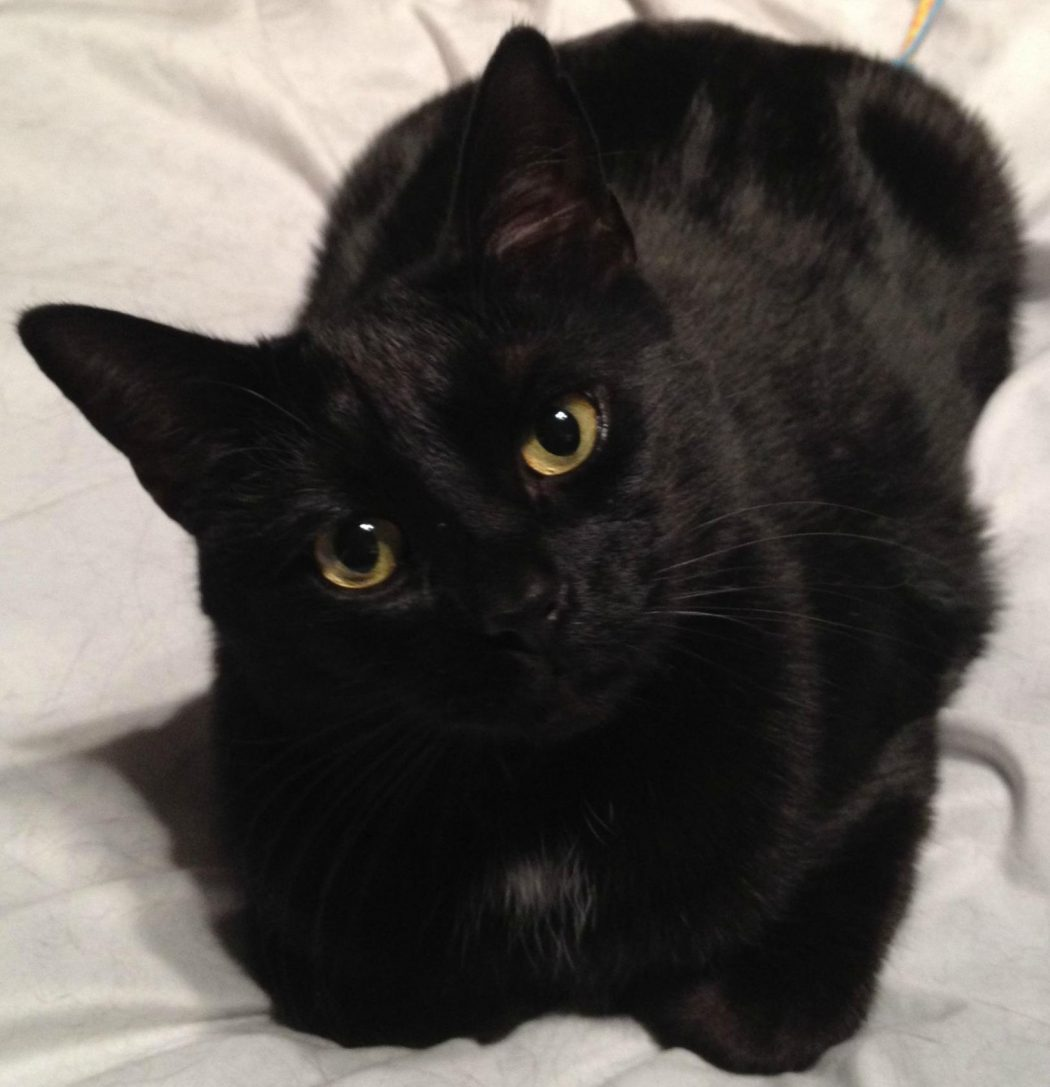 211 The Most Beautiful Black Cats