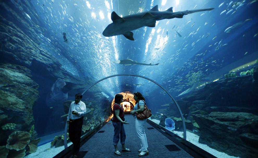 311 Why Atlantis Dubai Hotel is My Favorite Between Arab Hotels?