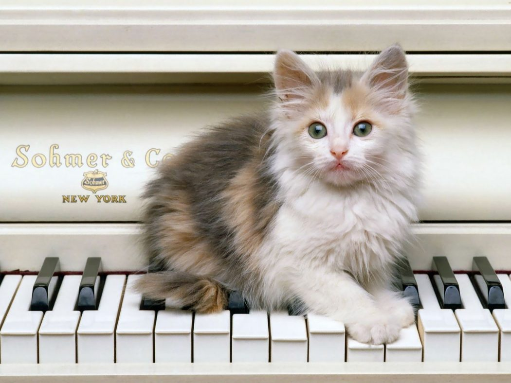 39371-cats-funny-cat-playing-piano 10 Best Amazing Videos For Cats