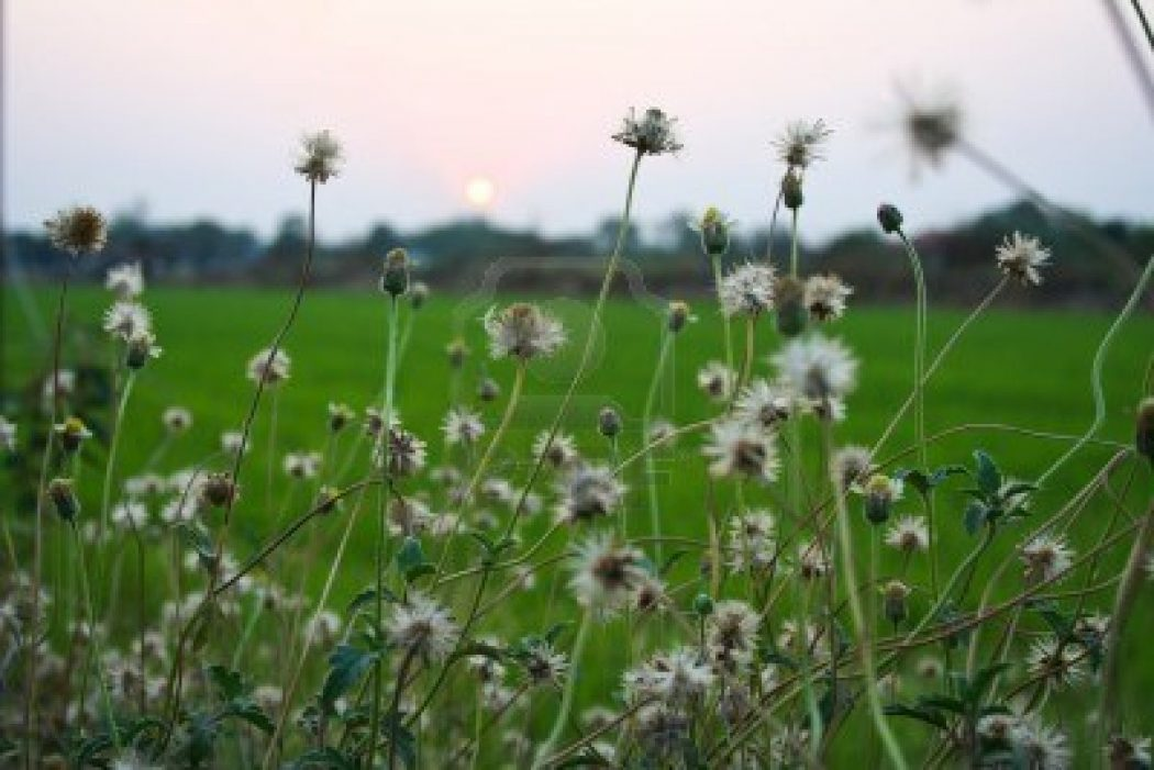 8454870-landscape-sunset-thailand-flower-light-macro-plants-travel-trekking-trip How Artificial Plant Lights Will Help Growing Your Plants?