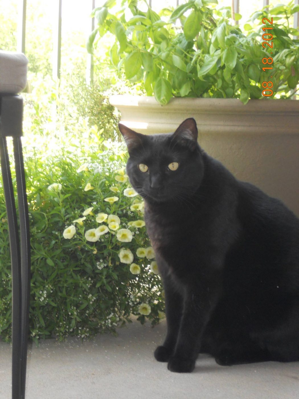 91 The Most Beautiful Black Cats