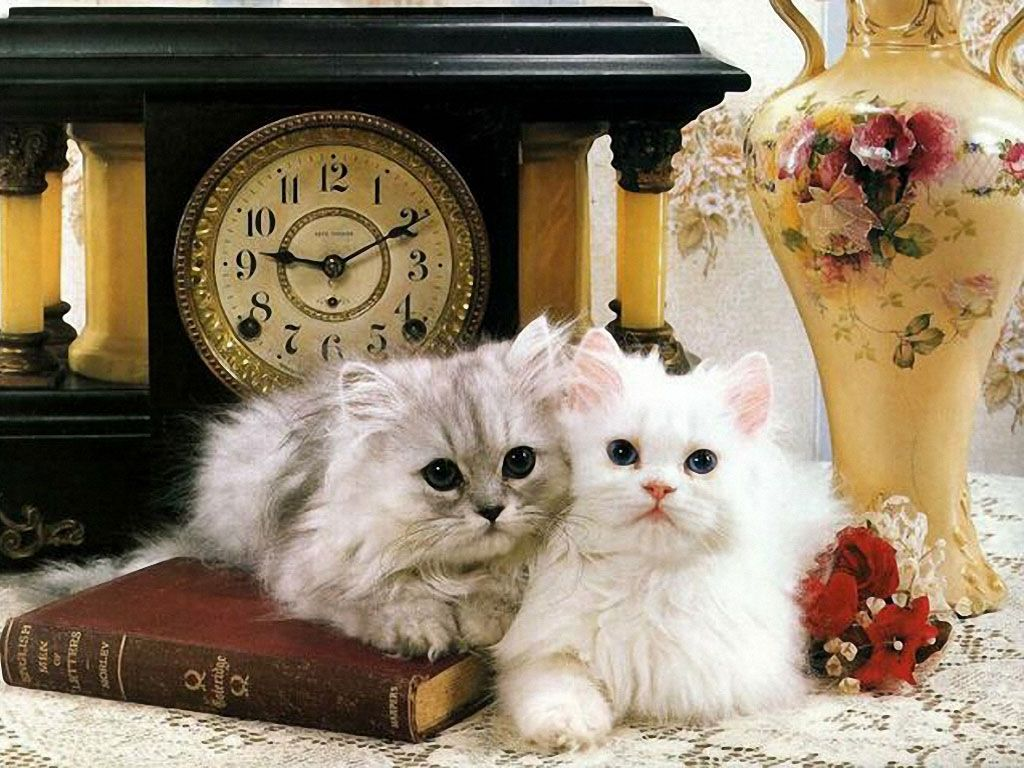 Beautiful-funny-cats-wallpapers-funny-cat-videos-and-pictures 10 Best Amazing Videos For Cats
