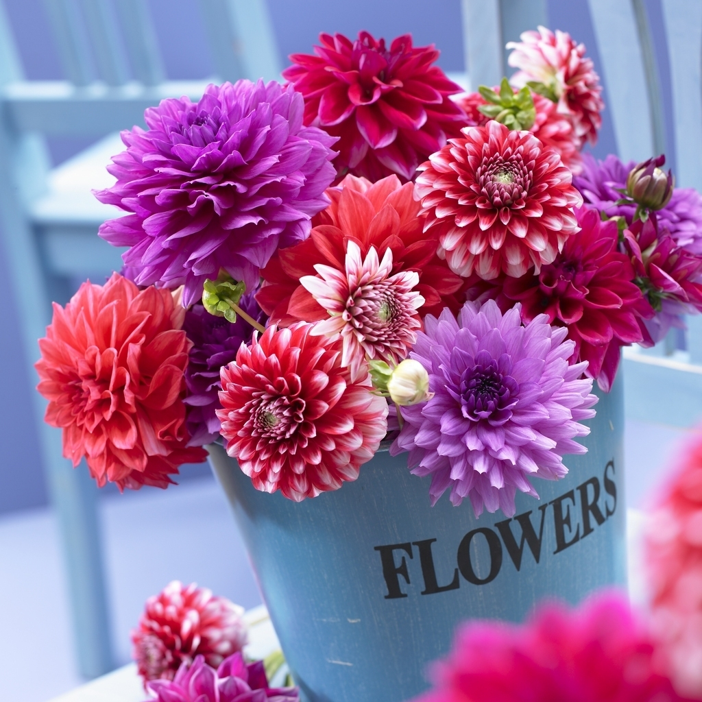 DahliaGiftBox1 What Do You Know About Flower Talk?