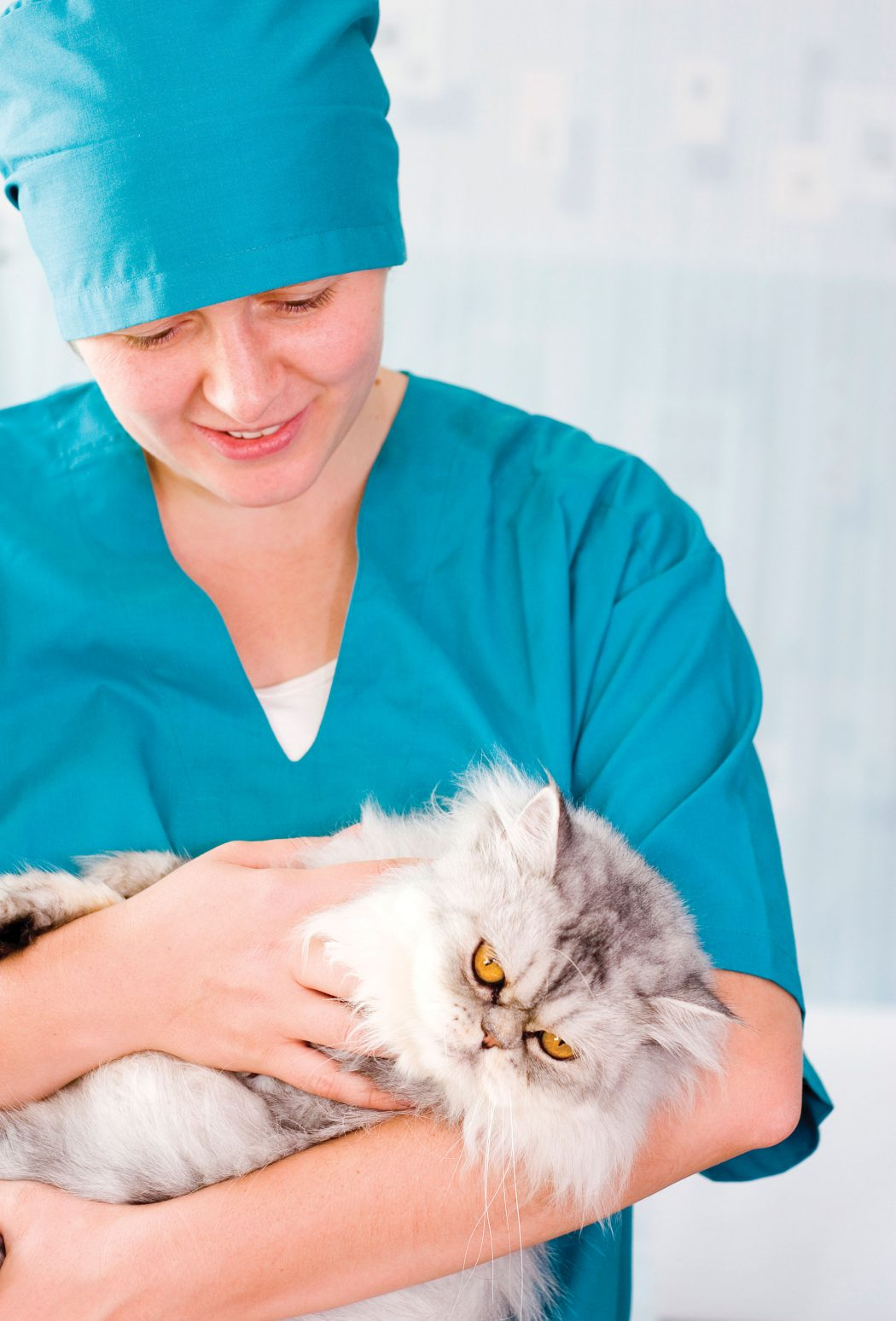 Doctor-Cat First Aid for Your Cat