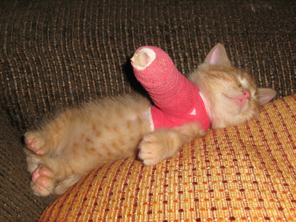 Does-Your-Kitten-Need-Pet-Insurance First Aid for Your Cat