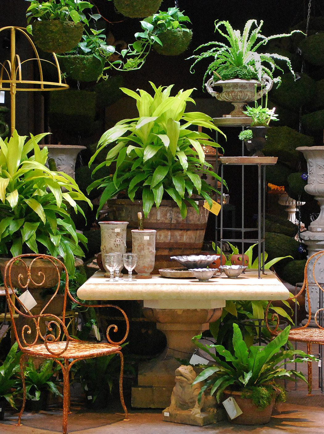 Fern How To Make Plants A Part Of Your Home Decoration?