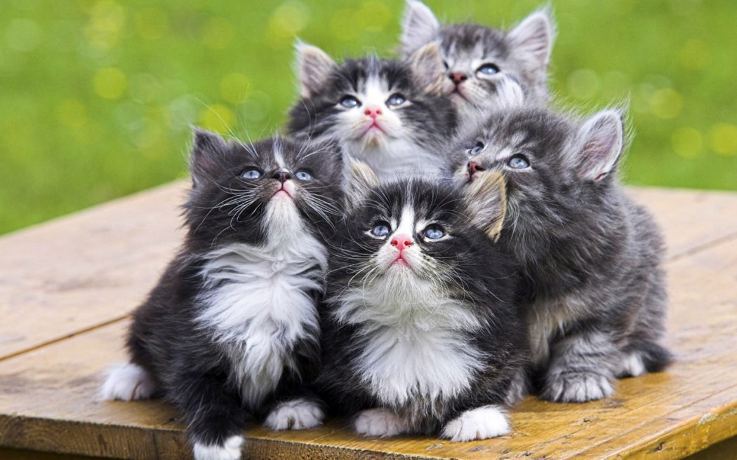 Funny-Cat-Picture-361 10 Best Amazing Videos For Cats