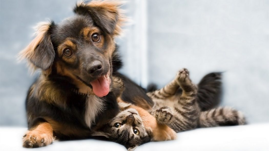 Funny-Cat-and-Dog-Friendship-8 10 Best Amazing Videos For Cats