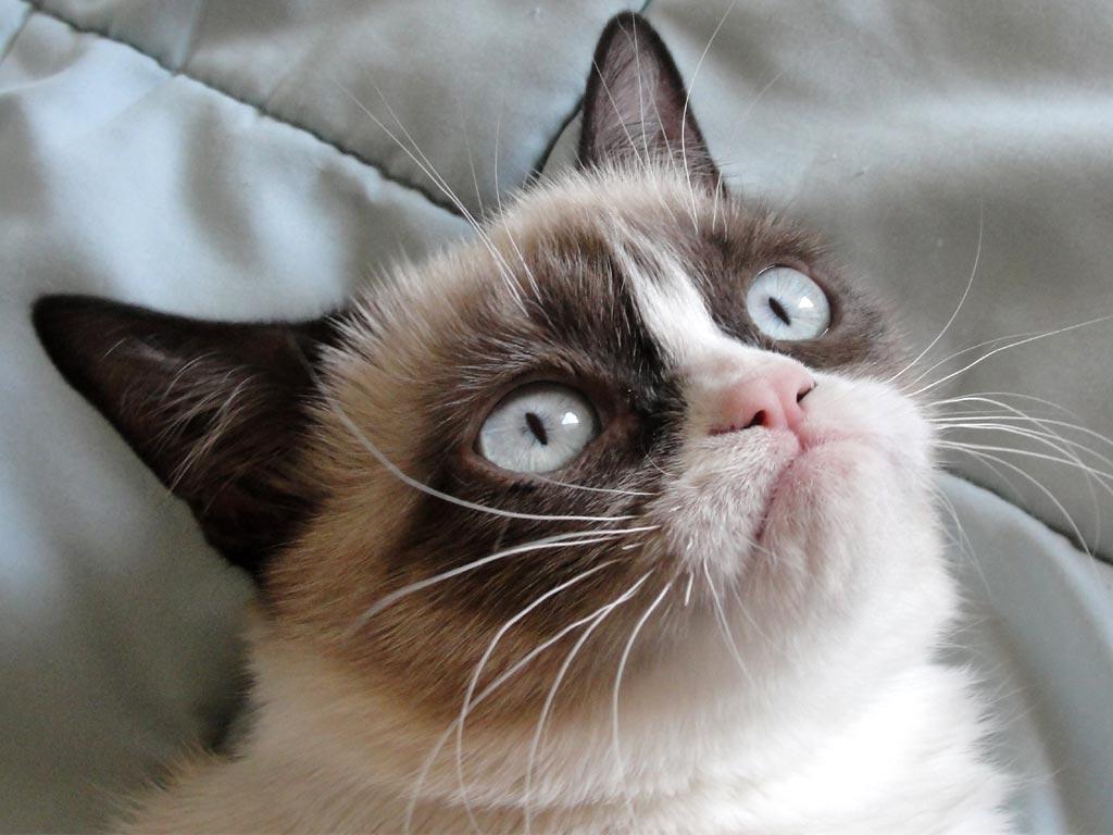 Grumpy-Cat Can Grumpy Cat Speak Or Not ?