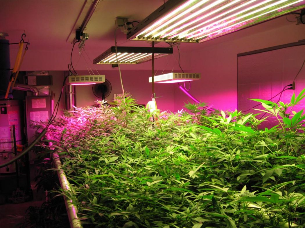 How Artificial Plant Lights Will Help Growing Your Plants