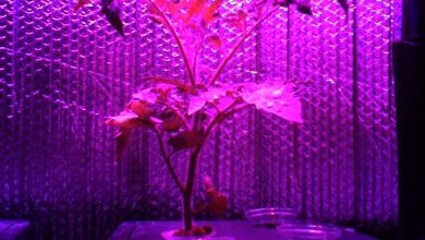 Photo of How Artificial Plant Lights Will Help Growing Your Plants?