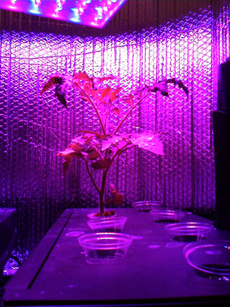 Led-Lights-Aerogarden How Artificial Plant Lights Will Help Growing Your Plants?