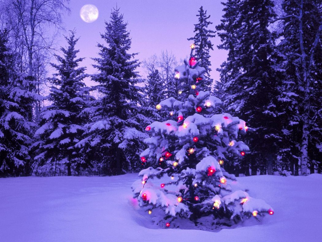 New-Year-Forest-Tree-Lights-Greeting-Cards Wonderful greeting cards for happy holidays