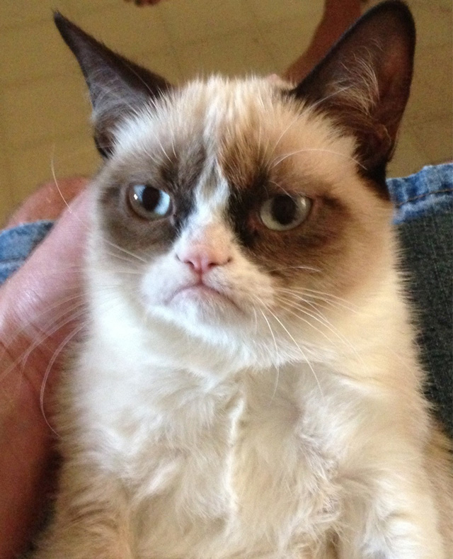 Tard2 Can Grumpy Cat Speak Or Not ?