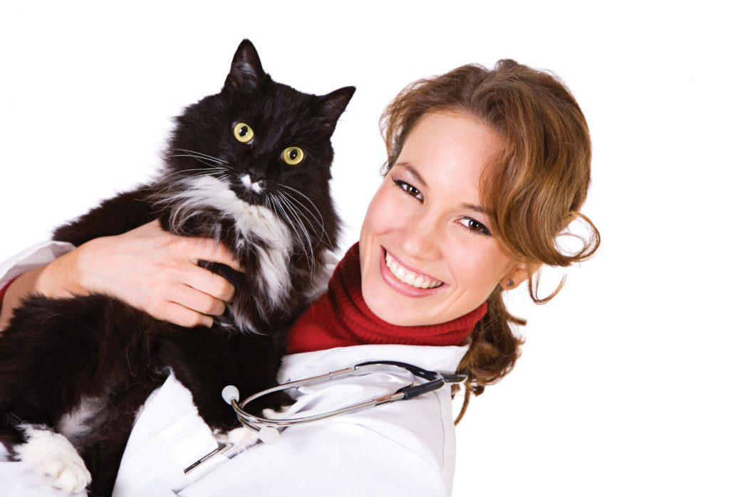 Vet-And-Cat First Aid for Your Cat
