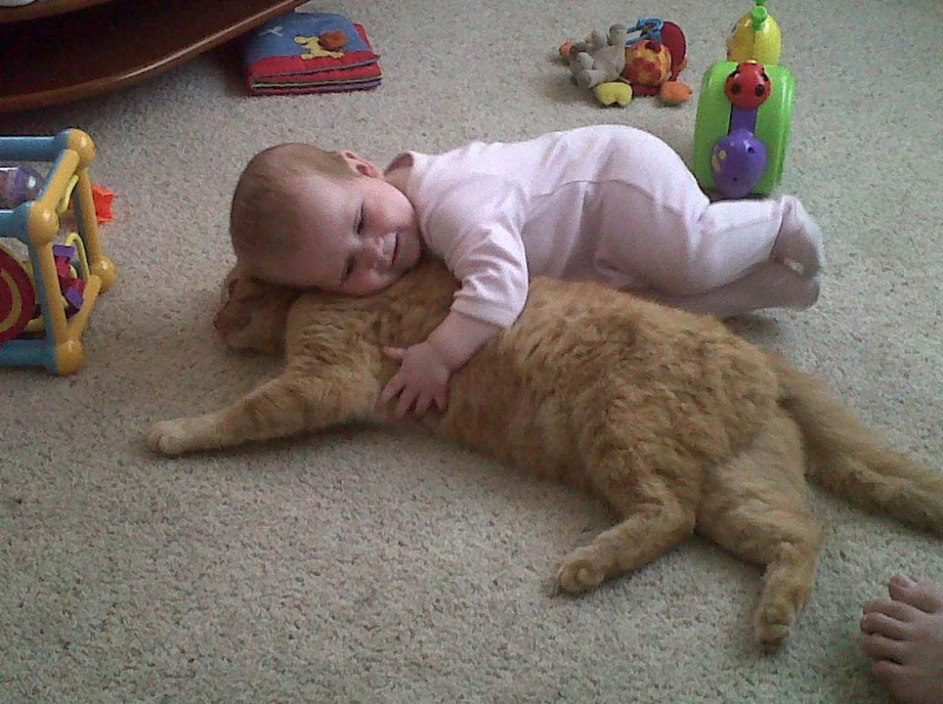 baby-cat-cats-kitten-kitty-pic-picture-funny-lolcat-cute-fun-lovely-photo-images 10 Best Amazing Videos For Cats