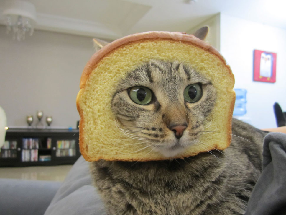 breadingcats 4 Tips For Breading Your Cat
