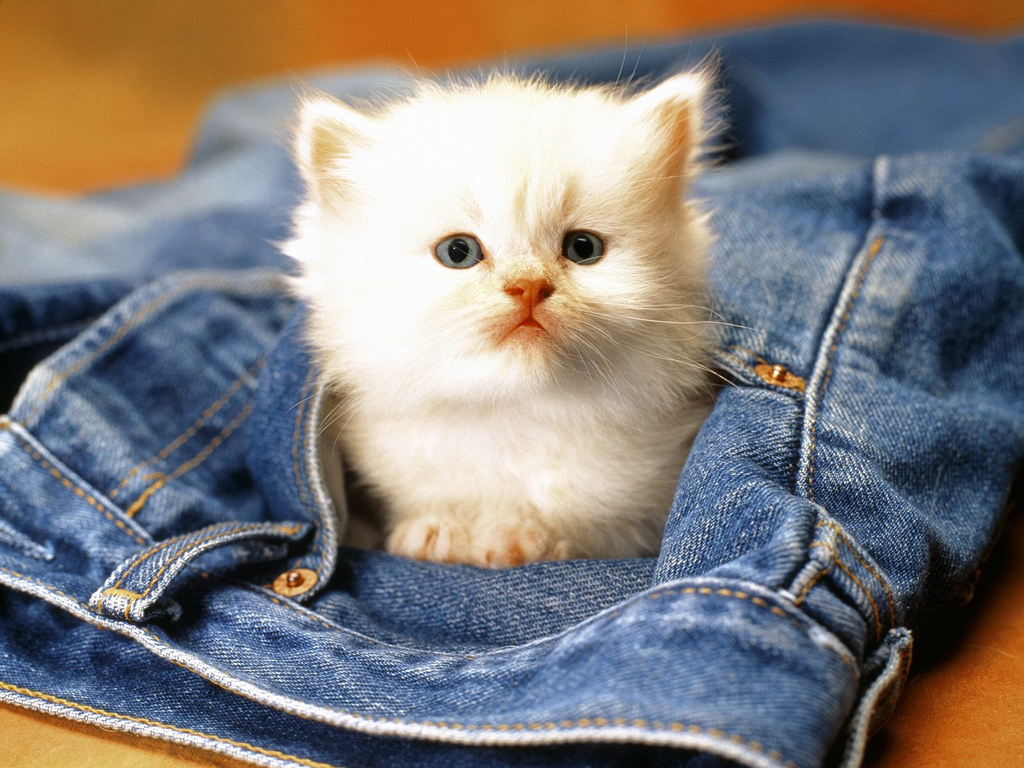 cat-wallpaper-for-windows-7 Top Funniest Cats in The World...