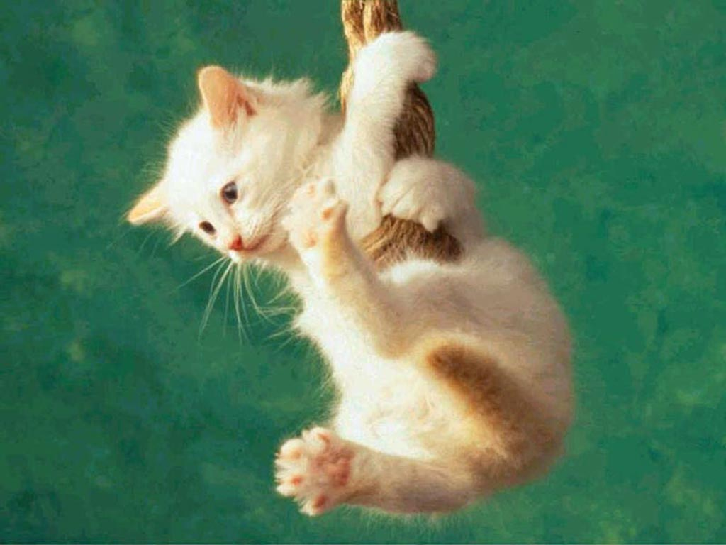 cats-pictures-funny-photos-cat-cool-3 Top Funniest Cats in The World...